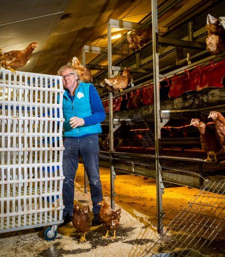 Boer Piet blij dat hij na vogelgriep weer kippen heeft, maar gemeente en buren níet: 'Hij komt er weer mee weg'