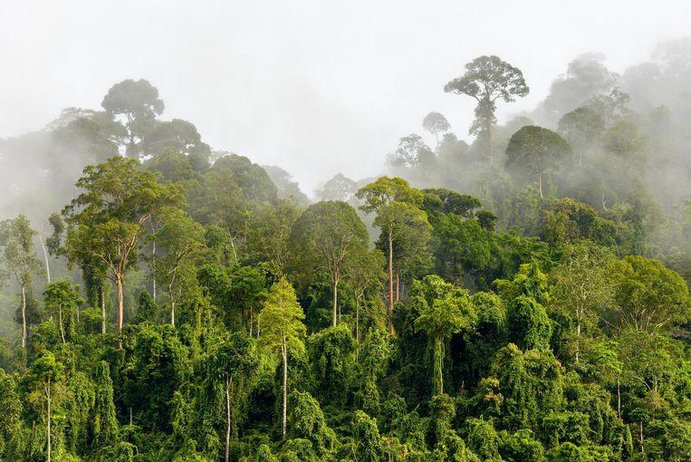 De nevelwouden van Wayqecha, Peru, hebben vocht uit de wolken nodig om zichzelf in stand te houden, maar door klimaatverandering ligt die wolklaag elk jaar hoger. Beeld Thinkstock