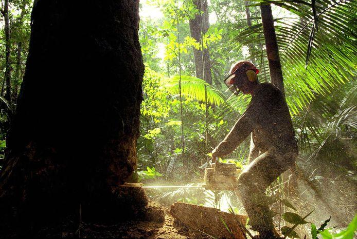 Le trafic de bois est l'une des causes de la déforestation