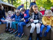 Niet voeren bij mobiele kinderboerderij Achtse Barrier: 'Want dan wordt de ezel boos als hij niet alles krijgt'
