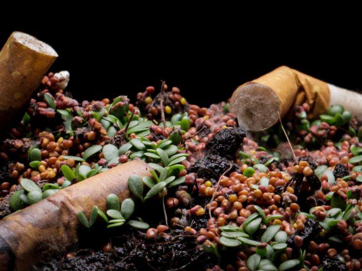 Indrukwekkende timelapse laat zien hoe slecht sigarettenpeuken zijn voor de natuur