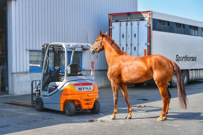 Paard aan de Industrieweg in Bergeijk.