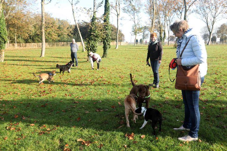 Baasjes laten hun viervoeters ravotten op de nieuwe hondenloopweide.
