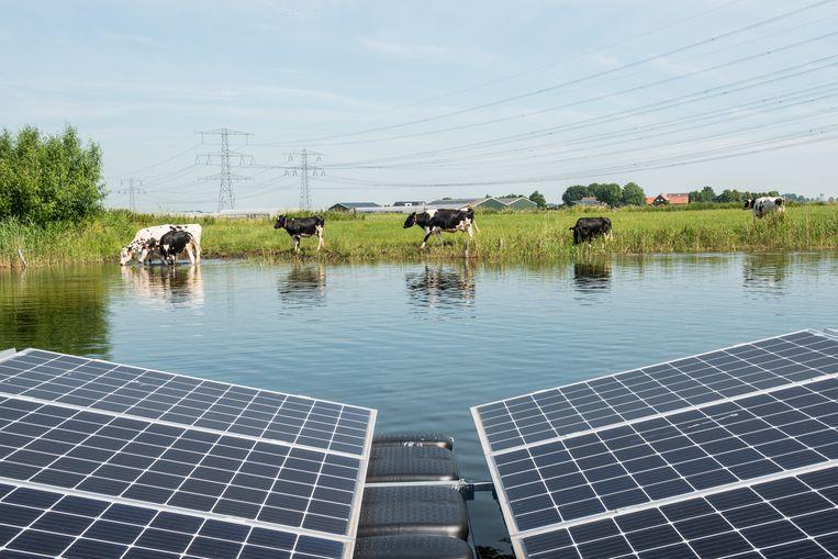 Zonnepanelen in de Bomhofsplas bij Zwolle. Beeld Simon Lenskens