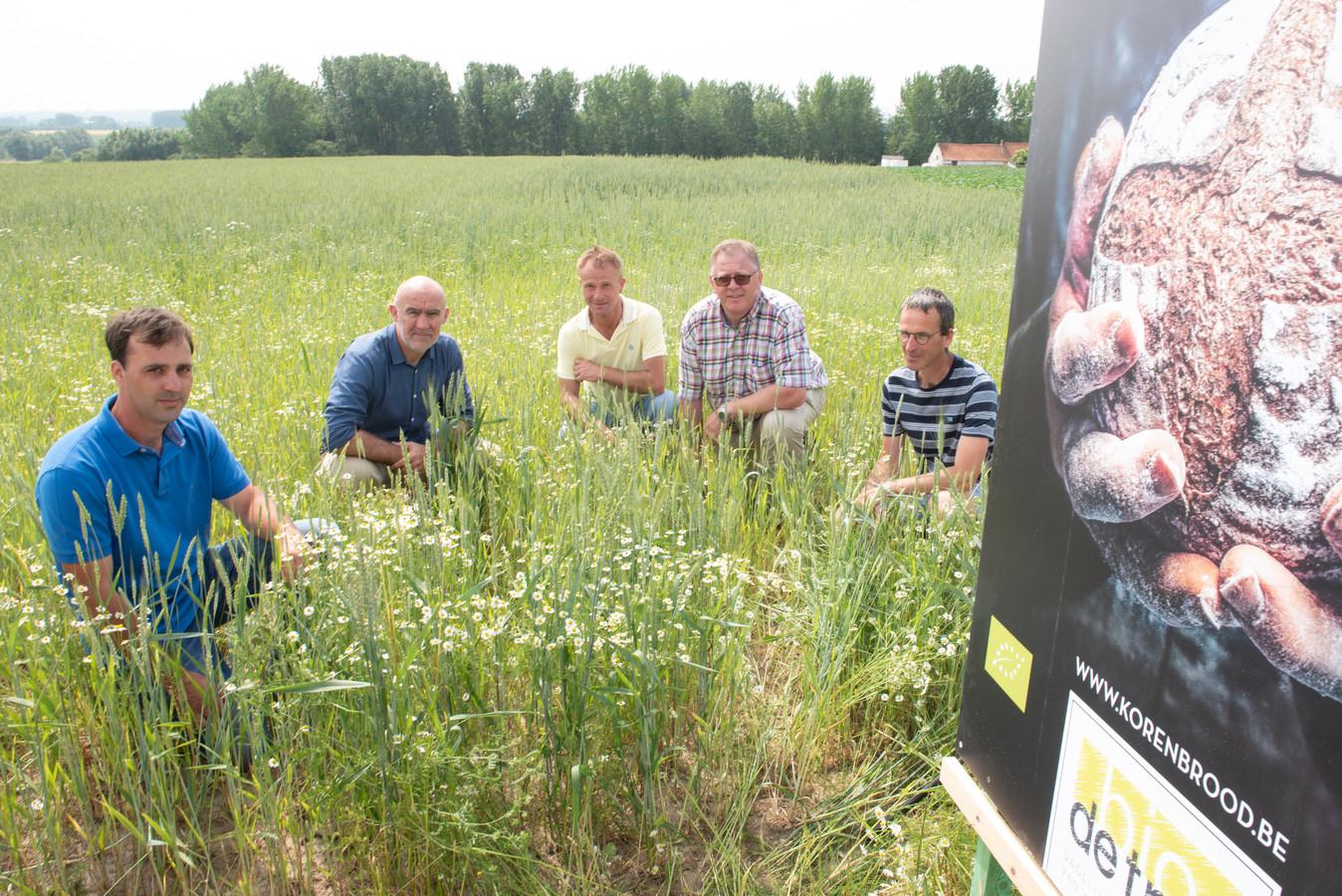 Landbouwer Simon Colembie (links) samen met partners van de korte keten in het veld in Huise waar de verschillende granen door elkaar groeien.