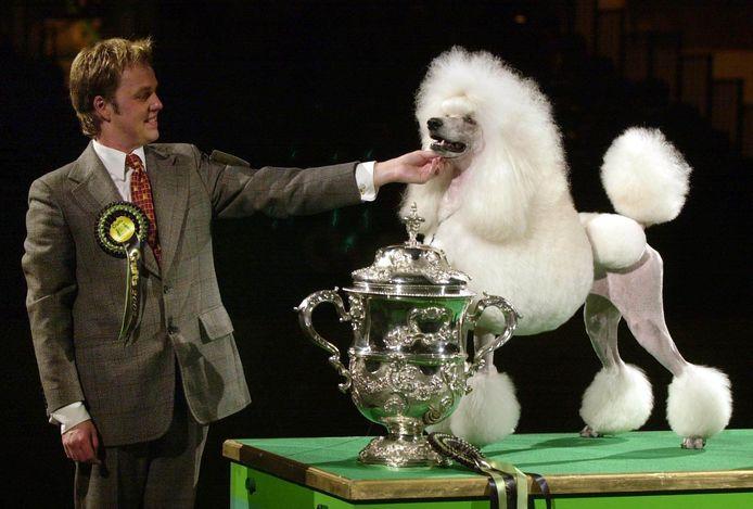 De eigenaar van een prijswinnende poedel tijdens een hondenshow in het Engelse Birmingham in 2002.