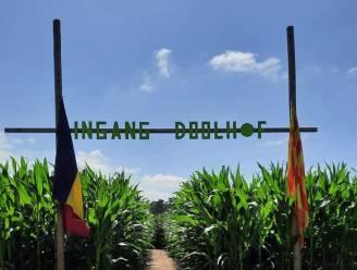 Nieuwe locatie voor maïsdoolhof in Peer