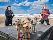 Tamara (50) en Annelies (51) liggen wakker over het lot van zwerfhonden: 'Er zijn geen vluchten meer'