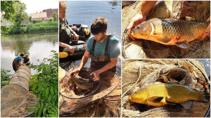 In de Grote Bassin in Roeselare werden de vissen geteld en gecategoriseerd nav de 1.000-soortendag