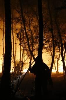 Groot stuk bos afgebrand in Boxmeer