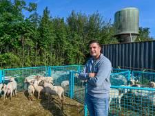 Zorgen om waardeloze schapenwol: 'De wol kan in de verbrandingsoven eindigen'