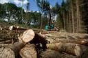 Dennenbos vervangen door loofbos helpt tegen de verdroging.
