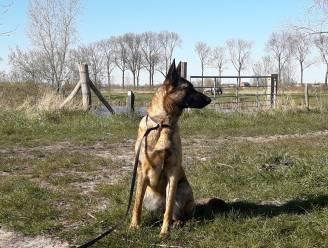 """Politie van Maldegem gaat strenger toezien of honden aan de leiband worden gehouden: """"We kregen heel wat meldingen binnen"""""""