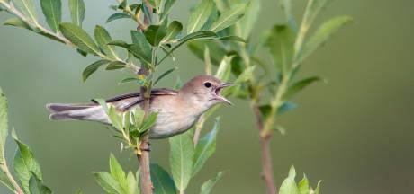 Wat ruist er in het struikgewas: een vogel of het geluid van een windmolen?