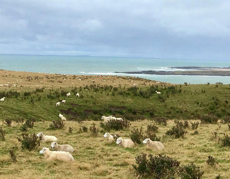 Slope Point, het zuidelijkste punt van Zuidereiland. Beeld Kathleen Verschuere