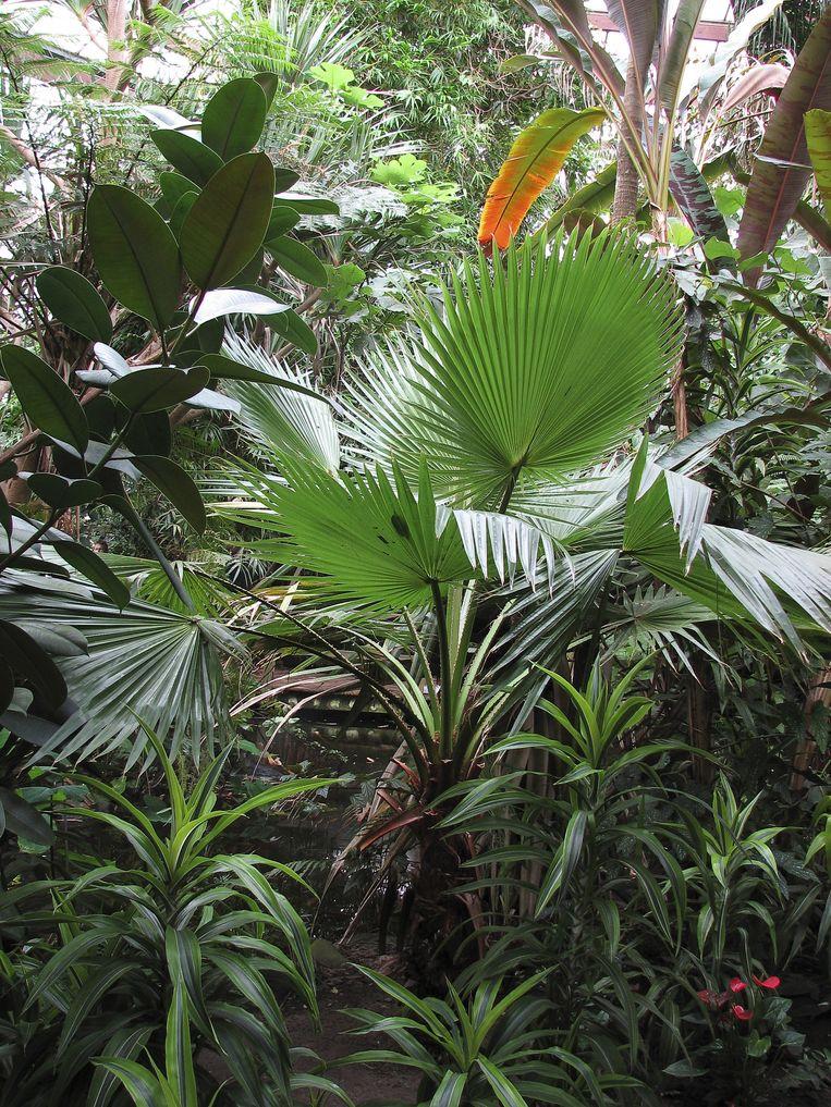 4. Inrichting: Planten. 'Wat er nog wel in mijn werkkamer staat? Planten. Heel veel planten, alsof je in een plantenkas loopt.' Beeld Hollandse Hoogte