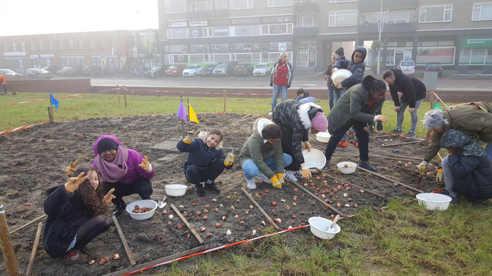 Leerlingen van de Parkschool leggen een tulpenveld aan in de wijk Poptahof.
