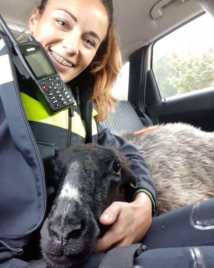 Het geredde schaap kon het goed vinden met de politie.