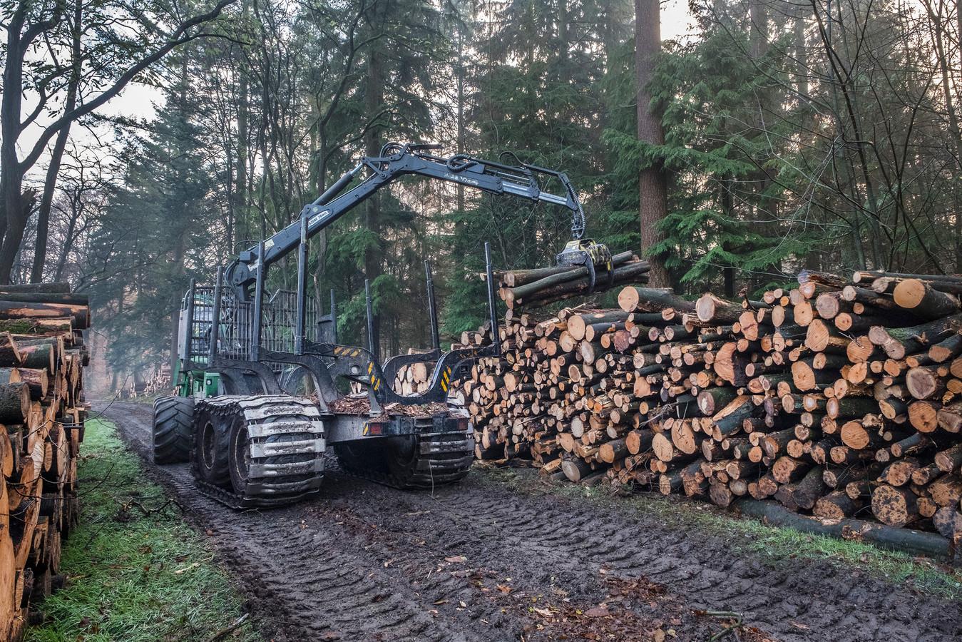 De bossen rond Groesbeek worden momenteel uitgedund door Staatsbosbeheer.