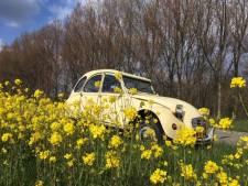 Willemstadse oldtimers toeren naar Zeeland en terug