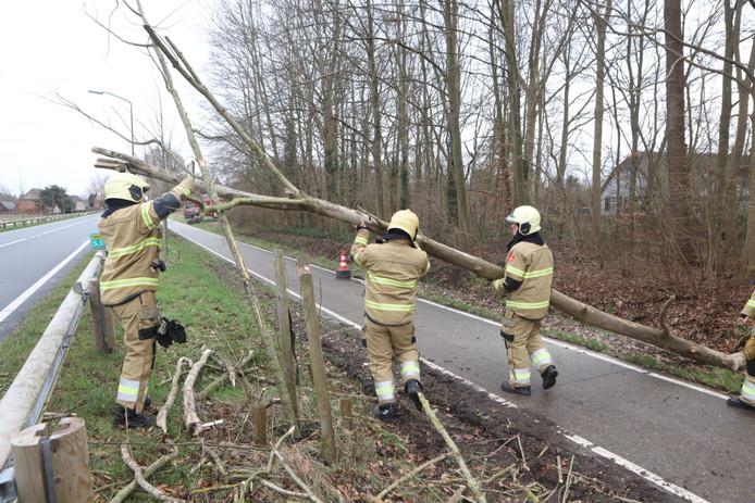 De boom blokkeerde het fietspad langs de provincialeweg bij Schijndel.