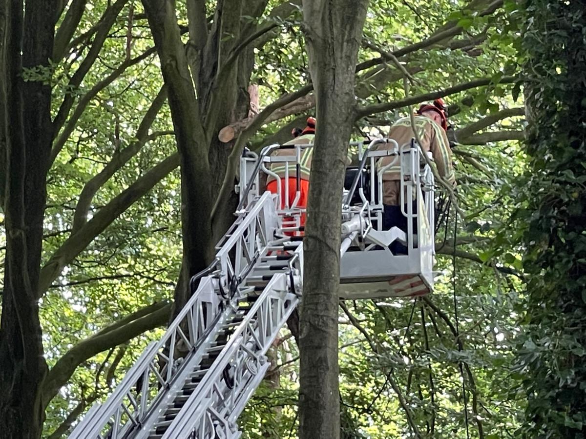 De brandweer ging de overhellende bomen in de Varendreef dan maar rooien.