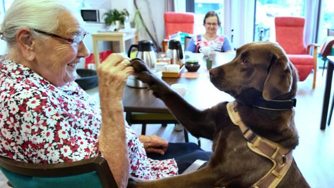 Dieren over de vloer in het verzorgingshuis: 'Een kalmerend effect, zelfs als de hond alleen maar ligt'