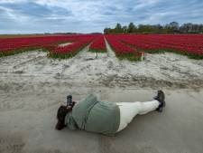 Tulpenliefhebbers negeren waarschuwing en duiken tóch de kleurige Flevolandse velden in: 'Sorry, sorry'