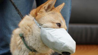 Hondenbaasjes in China kopen ook mondmaskers voor hun viervoeters