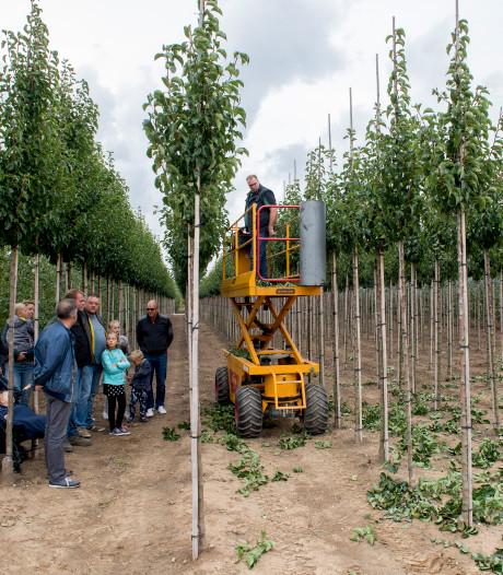 Laanboomsector werkt aan imago op eerste open dag