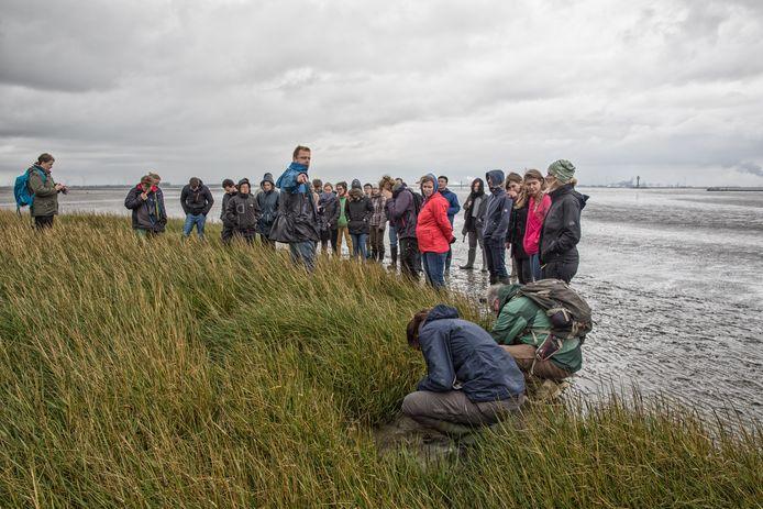 Een groep kust-ecologen krijgt uitleg van Jim van Belzen van het NIOZ.