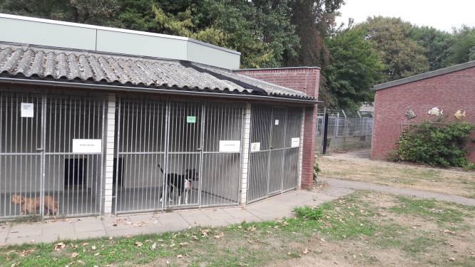 Faillissement Dierentehuis Den Bosch lijkt onafwendbaar, opvang katten en honden al geregeld
