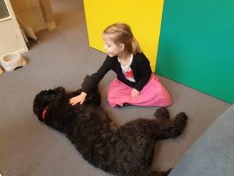 Elsa is geen schoothond, maar een schoolhond: 'hulpjuf' springt bij voor troost