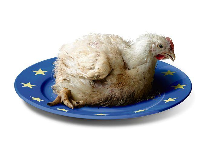 De plofkip op het menu van de EU