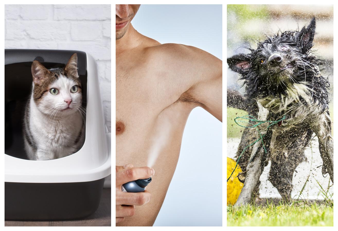 Kattenurine, zweet en natte hond: we weten allemaal dat het stinkt, maar hoe komt dat?