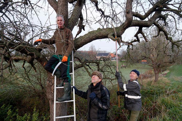Leden van de Hoogstambrigade: Wim Struijk, Thijs van der Meijden en Jan van Zee (vlnr) aan het werk in de hoogstamboomgaard van Frissestein langs de Waaldijk in Herwijnen.