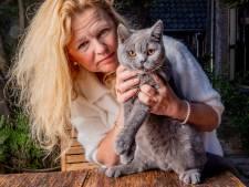 Dierenmishandeling wordt veel te weinig gemeld, zegt expert: 'Wie op een kat schiet, oefent voor iets ergers'