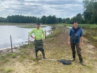 """Visliefhebbers proberen overgebleven vissen te redden na de storm: """"Iedereen moet echt in actie schieten, de plassen gaan niet lang meer blijven liggen"""""""