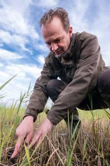 Vleesetende planten krijgen meer ruimte in Nieuwkoopse Plassen