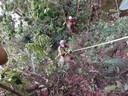 Leden van de Panamese civiele bescherming tijdens het zoeken naar de verdwenen meiden.