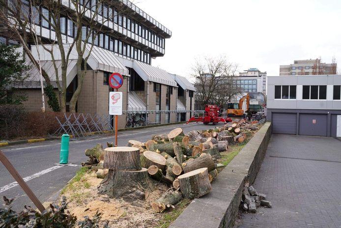 Deze rij van 16 bomen aan de Henleykaai werd gekapt.