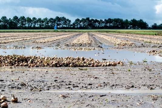 Uienveld in omgeving van Fijnaart. Foto: Tonny Presser/Pix4Profs