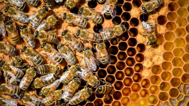 Bijen lossen rekensommen op zonder cijfers te gebruiken