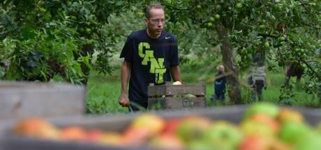 De appels zijn bijna op, nieuwe oogst onderweg