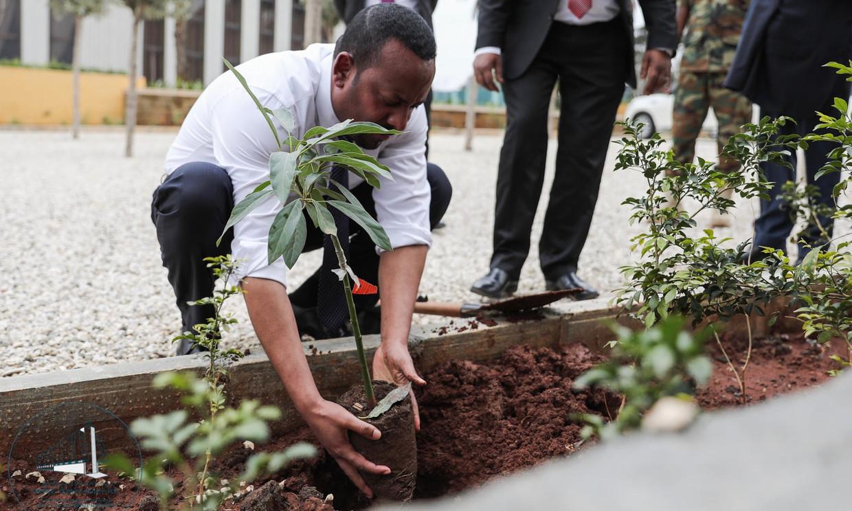 Eerste minister Abiy Ahmed, plant een boom in hoofdstad Addis Abeba. Beeld Aron Simeneh
