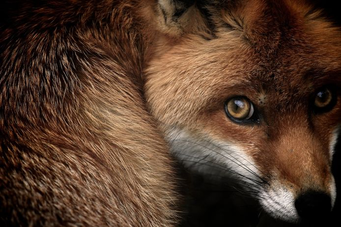 Les British Wildlife Photography Awards célèbrent 10 ans de superbes photos d'animaux.