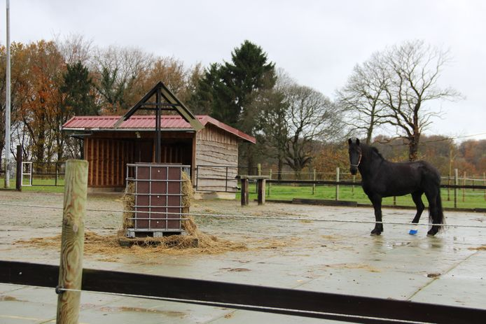 Het MFC Heynsdaele - pedagogisch centrum Wagenschot ontvangt 5.000 euro subsidie voor de uitbouw van de paardentherapie.