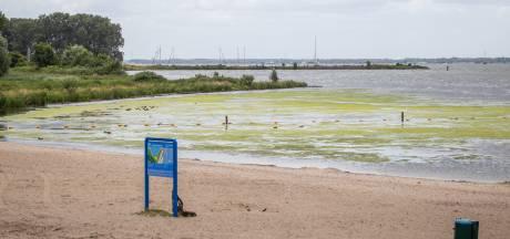 Zwemmen bij Hitsertse Kade tijdelijk ontraden vanwege waterplanten