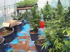 Politie vindt bijna 200 hennepstekken in tuin Sint Annaland, bewoner (20) aangehouden