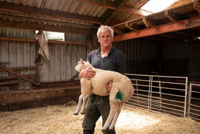 Boer Nico Kalter met het schaap dat de slachtpartij door een wolf in zijn weide in Laag Zuthem overleefde.